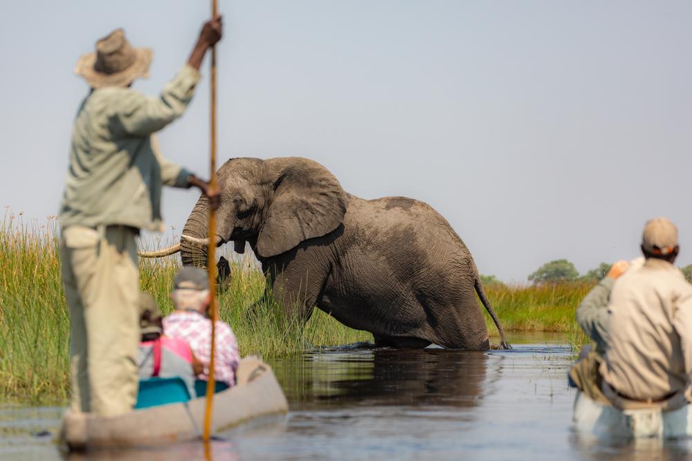 Safari | Voyage Unique - Reisbureau Sint-Martens-Latem