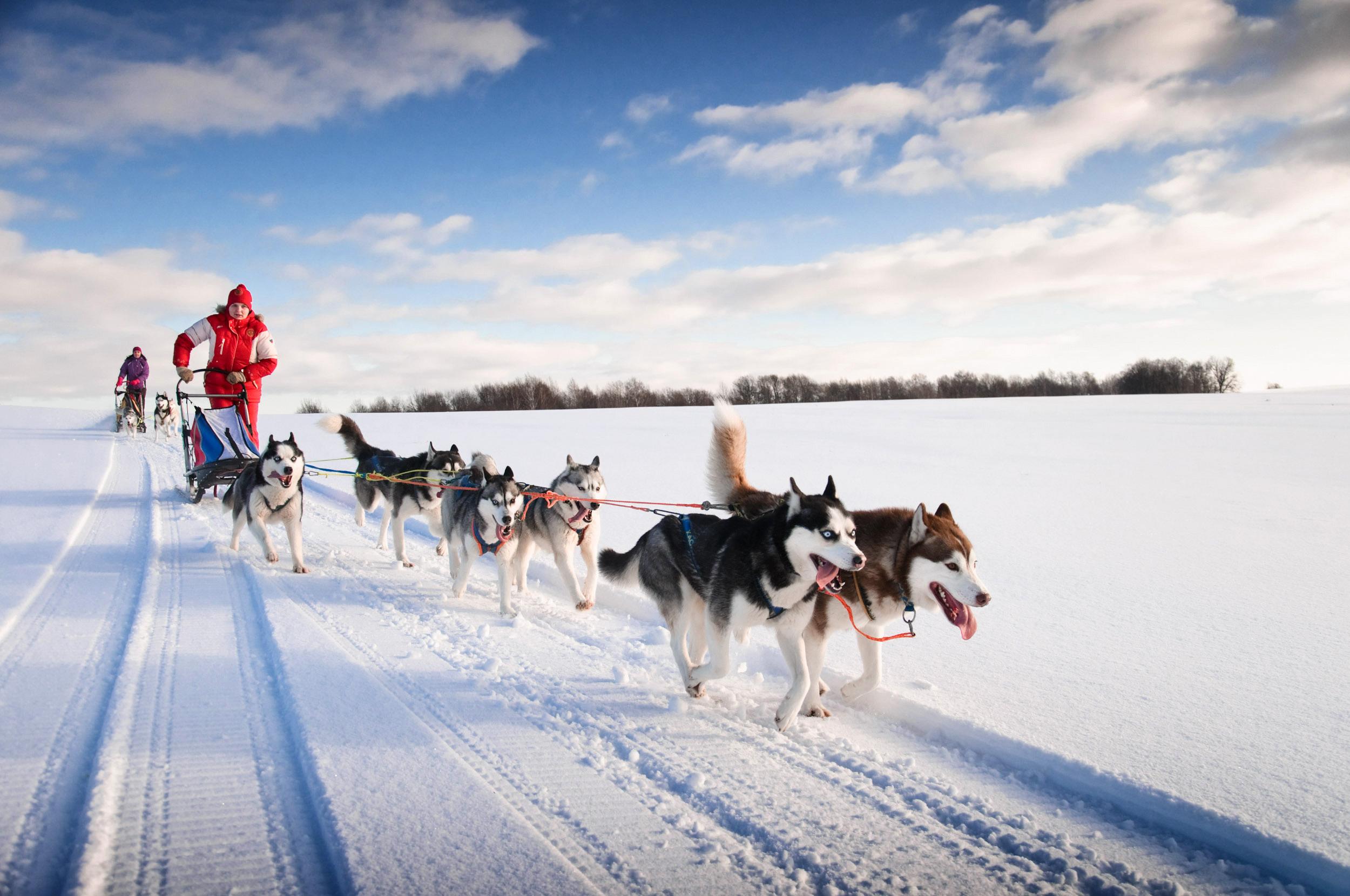 Voyageunique Fins Lapland Husky